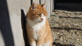 Katt nära husfilmen stock video