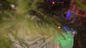 Katt nära julgranen och gåvorna arkivfilmer