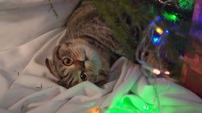 Katt nära julgranen och gåvorna stock video