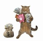 Katt nära säcken av dollar royaltyfri foto
