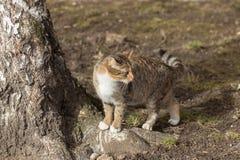 Katt nära trädet Royaltyfri Bild