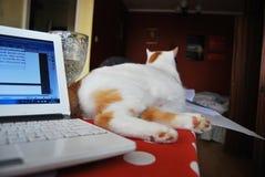 Katt och anteckningsbok royaltyfri foto