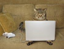 Katt och anteckningsbok royaltyfri fotografi