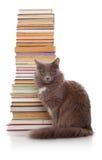 Katt och böcker Royaltyfri Bild