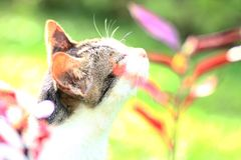 Katt och blomma arkivbilder