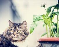 Katt och blommakruka Arkivbild