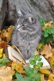 Katt och bok Royaltyfria Foton