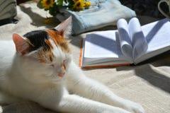 Katt och bok Royaltyfri Foto
