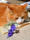 Katt och bok Royaltyfri Fotografi