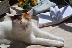Katt och bok Fotografering för Bildbyråer