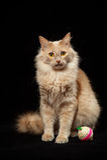 Katt och boll Arkivbild