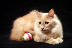 Katt och boll Arkivbilder