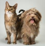 Katt och bolonka arkivfoto