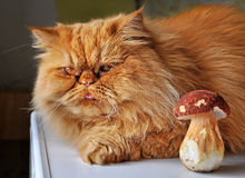 Katt och champinjon Arkivfoto