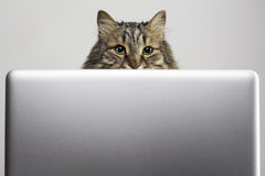 Katt och dator Royaltyfria Foton