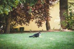 Katt och ekorre i gården Arkivfoton