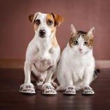 Katt och en hund i häftklammermatare Arkivbilder