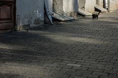 Katt och fågel i gata royaltyfria bilder