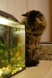 katt och fisk Fotografering för Bildbyråer