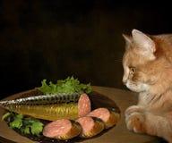 Katt- och fiskkorv royaltyfria foton