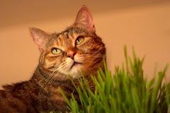 Katt och gräs Arkivfoto