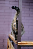 Katt och hans svans Fotografering för Bildbyråer