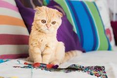 Katt och hobby arkivfoto