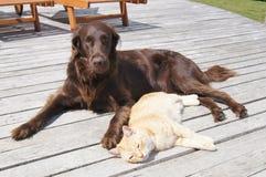 Katt och hund Arkivfoto