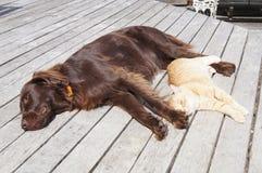 Katt och hund Royaltyfria Foton