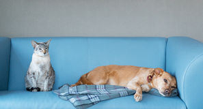 Katt och hund Arkivfoton