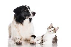 Katt och hund Arkivbilder