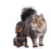 Katt och hund, royaltyfri foto