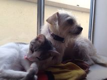Katt och hund i fönsterbräda Arkivbilder