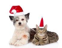 Katt och hund i röda julhattar som tillsammans ligger Isolerat på vit Fotografering för Bildbyråer