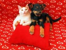 Katt och hund: kamratskap Arkivfoto