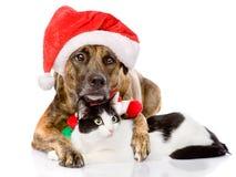 Katt och hund med den Santa Claus hatten bakgrund isolerad white Arkivbild