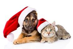 Katt och hund med den Santa Claus hatten bakgrund isolerad white Royaltyfria Foton