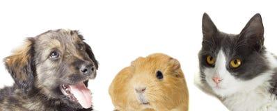 Katt och hund och försökskanin som ser upp Arkivfoto