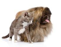 Katt och hund som bort ser bakgrund isolerad white Royaltyfri Foto