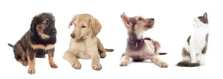 Katt och hund som ser upp Fotografering för Bildbyråer