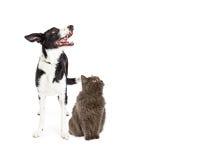 Katt och hund som ser upp in i tomt kopieringsutrymme Fotografering för Bildbyråer