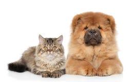Katt och hund som tillsammans ligger Arkivfoto