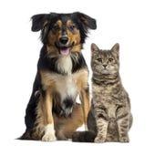 Katt och hund som tillsammans sitter Arkivfoton