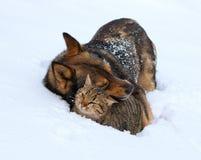Katt och hund som tillsammans spelar på snön royaltyfria bilder