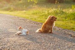 Katt och hund som tillsammans vilar på den varma asfaltvägen Katt och hund som ser i olika riktningar Royaltyfri Bild