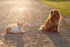 Katt och hund som tillsammans vilar på den varma asfaltvägen Solnedgång Royaltyfria Foton