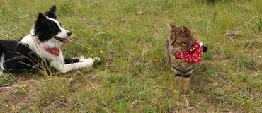 Katt och hund som vilar på grässlätten Arkivfoton