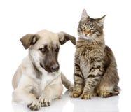 Katt och hund tillsammans. Fotografering för Bildbyråer