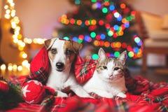Katt och hund under ett julträd royaltyfri bild