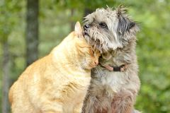Katt- och hundaktiesällskap i skogen Arkivfoto